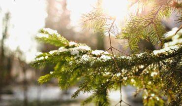 rosliny-zima