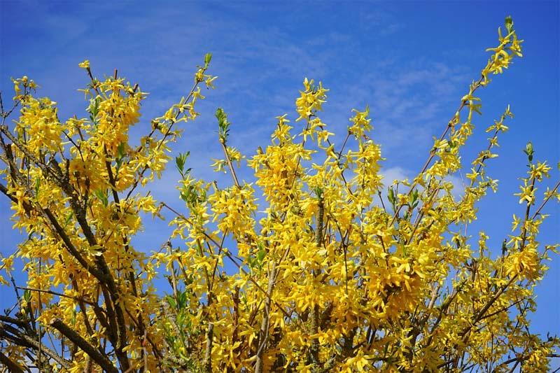 Rośliny kwietnia – ogród zwiastujący wiosnę