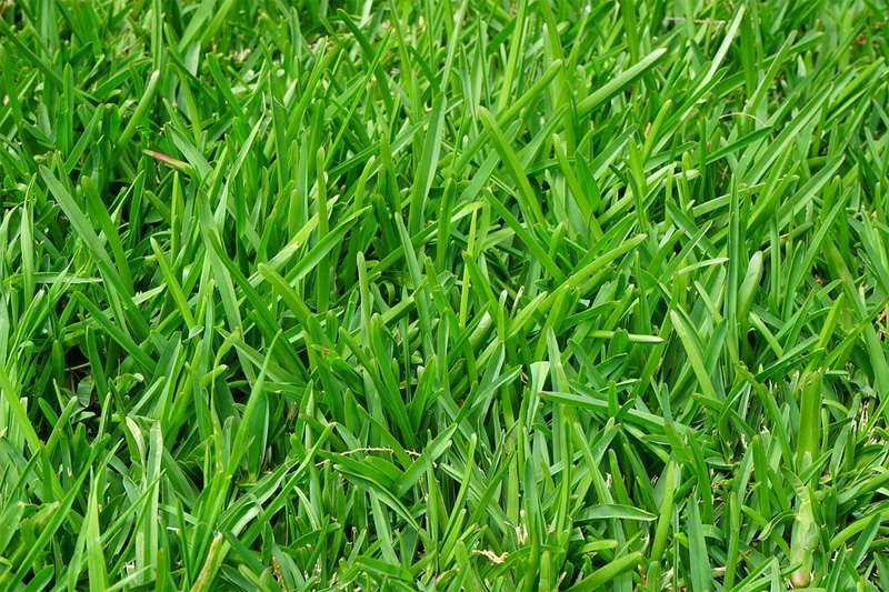 Trawnik – bohater ogrodu w lipcu