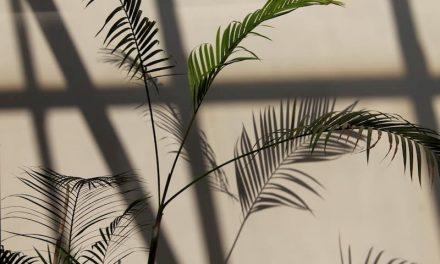Rośliny ogrodowe lubiące cień